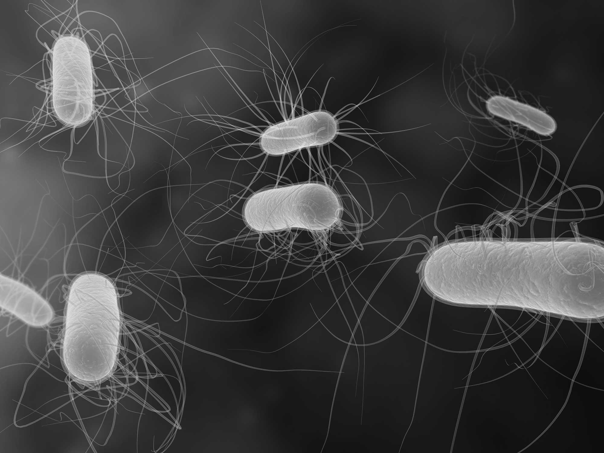 bacteria-virus